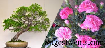 Sitges National Carnation & Bonsai Exhibition